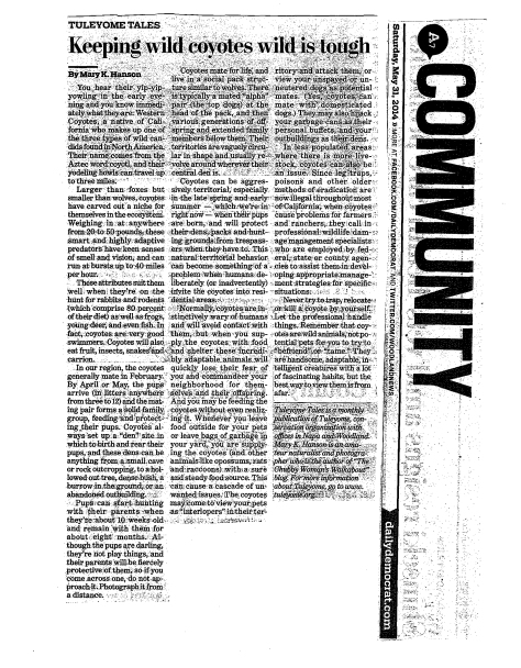 DailyDemocrat Coyote Article