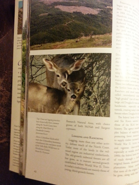 My photo of a mule deer and her fawn.