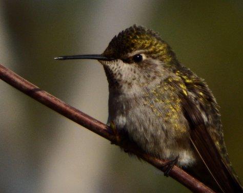 Hummingbird. © 2016 Mary K. Hanson. All rights reserved.